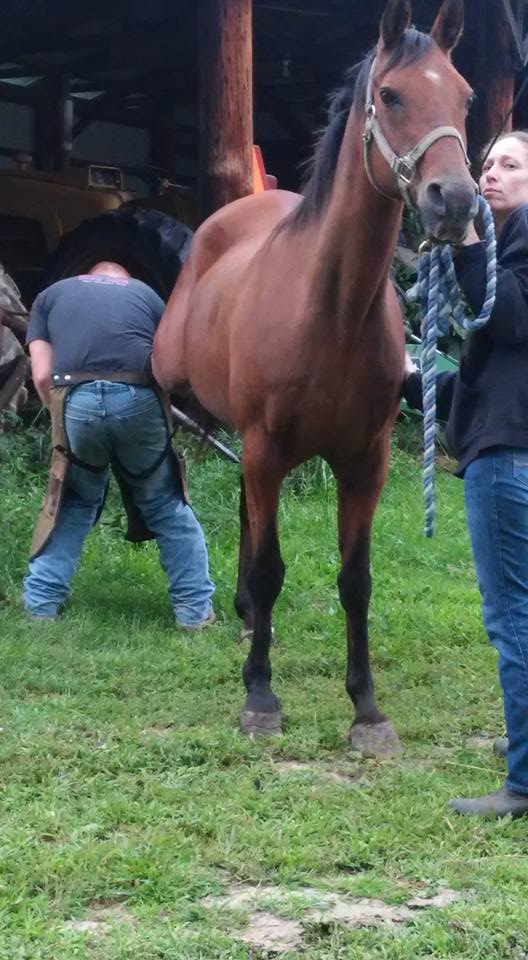 levi working on hindleg